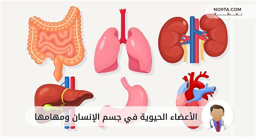 الأعضاء الحيوية في جسم الإنسان ومهامها