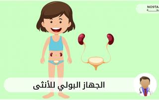 الجهاز البولي للأنثى