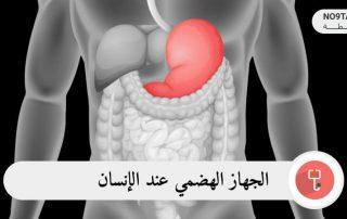 الجهاز الهضمي عند الإنسان